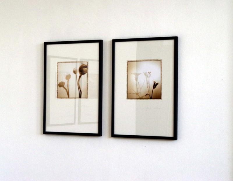 "Literaturhaus Stuttgart. Lochkamera Fotografien aus der serie ""Mihaelas Garten"""