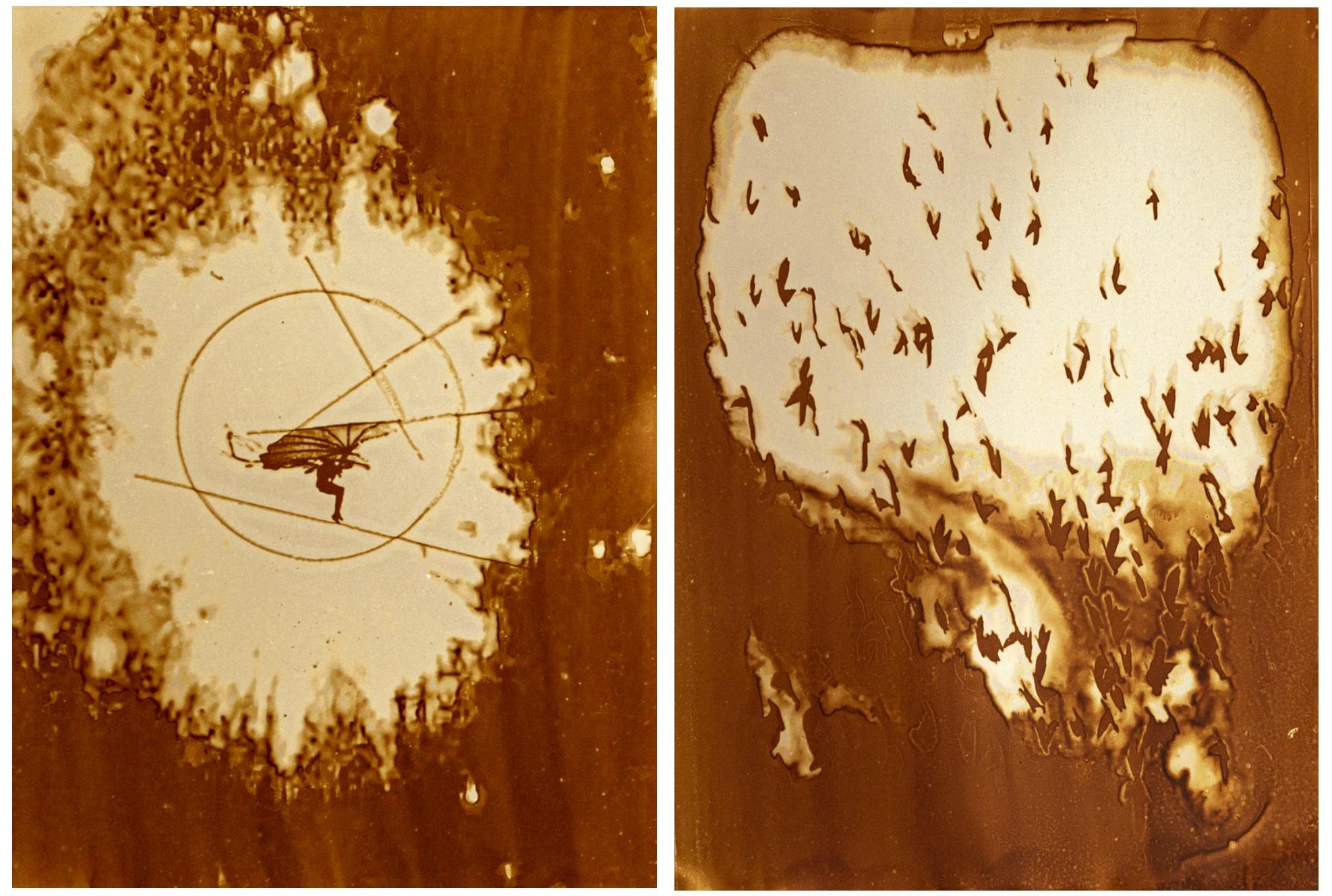 Heliographie, I-Bird, 2019 2x20x27cm (Passepartout 60x80cm) Metal Plate, Lavender Oil, Bitume de Judée